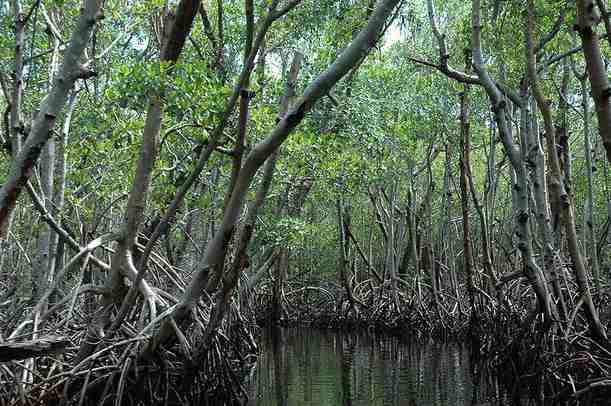 LEBIH DEKAT DENGAN EKOSISTEM DI INDONESIA Bagian II. | All about: Plant Evolution, Diversity ...